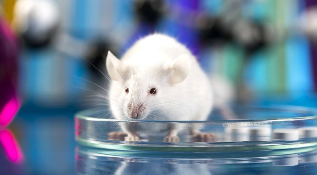 counter arguments for animal testing